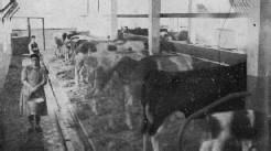 Imagen de la vaquería